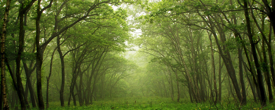 Natural Medicines from the Woods Are Powerful