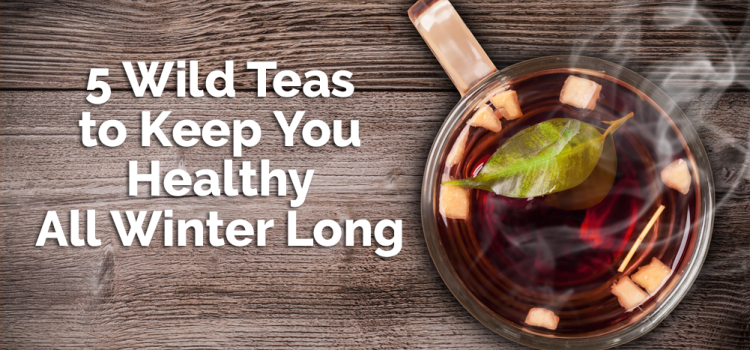 Five Wild Teas to Keep You Healthy All Winter Long